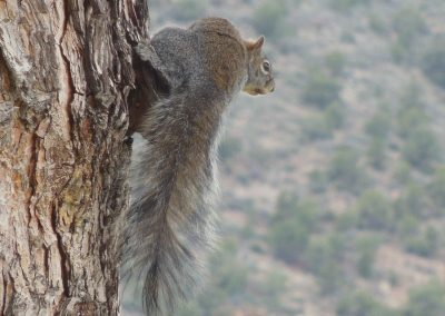 Squirrel's View