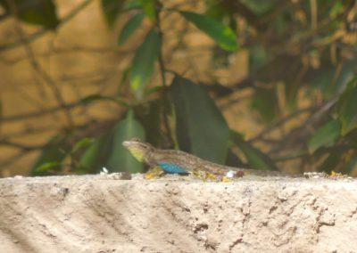 True Colors of a Lizard