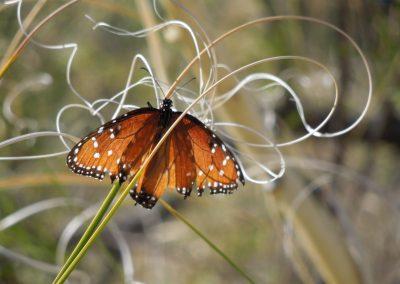 Butterfly Artistry
