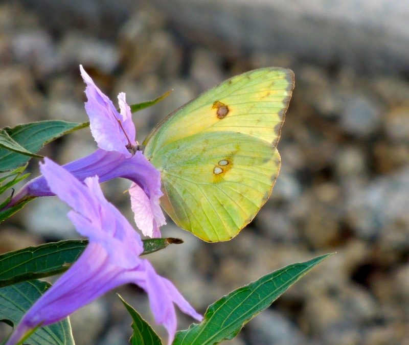 Green Cars, Yellow Butterflies and God
