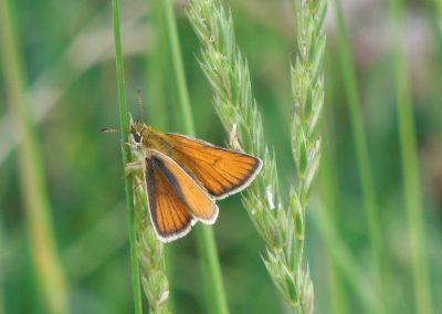 Montana Moth